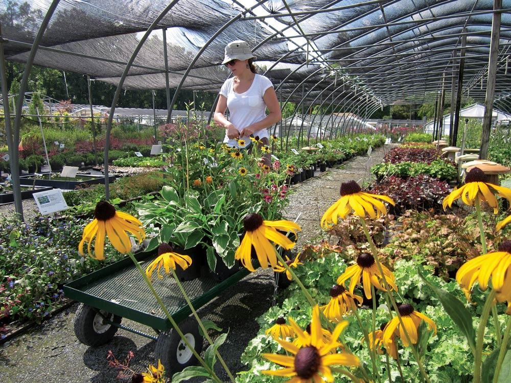 Sun Nurseries Inc Plants Locally